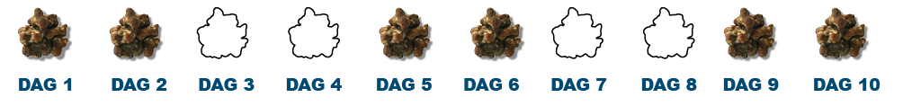 daily truffles